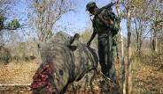 Afrika'da Milyon Dolarlık Savaş