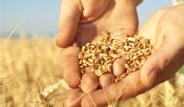 Sağlığa Faydalı 6 Süper Tohum