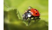 Fotoğraflarla: Bilim Dünyasından Göz Alıcı Kareler