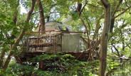 Kargalara Özenerek 300 Yıllık Ağacın Tepesine Yapılan Evden 19 Kare