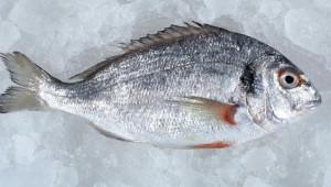 Balığın Taze Olup Olmadığını Anlamanın 6 Yolu