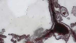 Yeryüzündeki İlk Canlının Fosili Bulundu