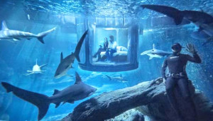 Okyanusun En Yırtıcı Hayvanlarının Arasında Uyumak İçin Yarışıyorlar!