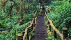 Yeryüzünün En Korkunç 5 Ormanı