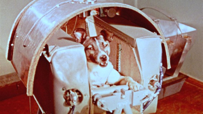 Uzaya Giden İlk Canlı: Köpek Layka'nın Hüzünlü Hikayesi