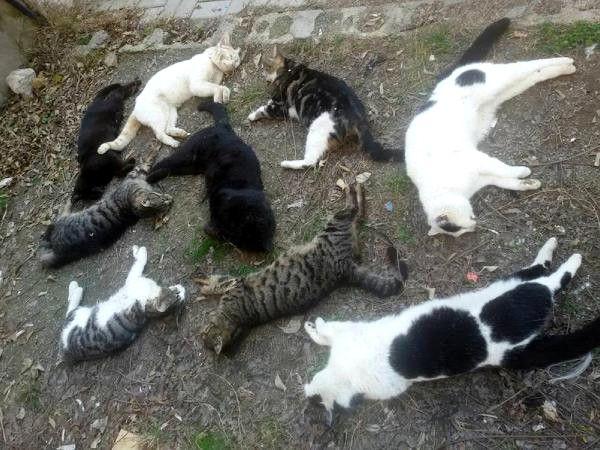 Kedi Katliamında Gözaltına Alınan Rus Serbest, System.String[]