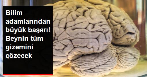 Bilim Adamları, Beynin Gizemini Çözmek İçin Esnek Sentetik Lif Üretti