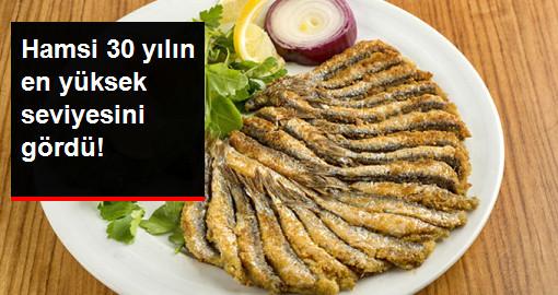 Balık Fiyatları Son 30 Yılın En Yüksek Rakamını Gördü
