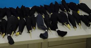 Ses çıkarmasınlar diye çoraplara saklamışlar!