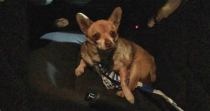 Polis karşıtı köpek gözaltına alındı