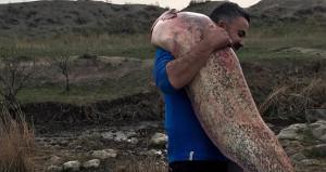 Yer: Iğdır! Boyundan büyük balık yakaladı