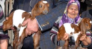Yıllardır hayvancılık yapıyor, böylesini ilk kez gördü