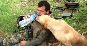 Şehidin yürek yakan fotoğrafı! Suyunu köpekle paylaşmış