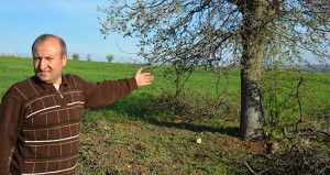 Şaka gibi ama gerçek: Ağaçları gasp ediyorlar