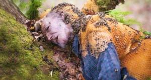 Arı sokması deyip geçmeyin, öldürüyor!