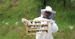 Lise mezunu iki kadın yeni bir arı ırkı geliştirdi