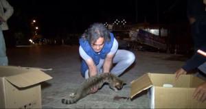 Yavru kedi ezilen annesinin karnından sağ çıktı