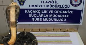 Elazığ'da yakalandı! Değeri 17 milyon lira çıktı