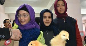 Konya'da başarılı öğrencilere civciv dağıtıldı