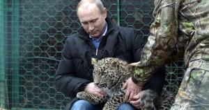 Putin'e kötü haber! Leoparı ölü bulundu