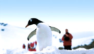 Soğuk Kıtada Son Penguenler