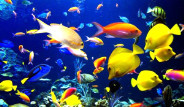Okyanuslardaki İlk Nüfus Sayımı