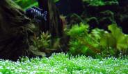 Kur'anda Adı Geçen Bitkiler