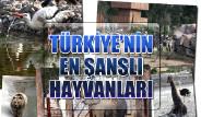 Türkiye'nin En Şanslı Hayvanları