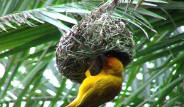 Mimar Kuşların Sanat Harikaları