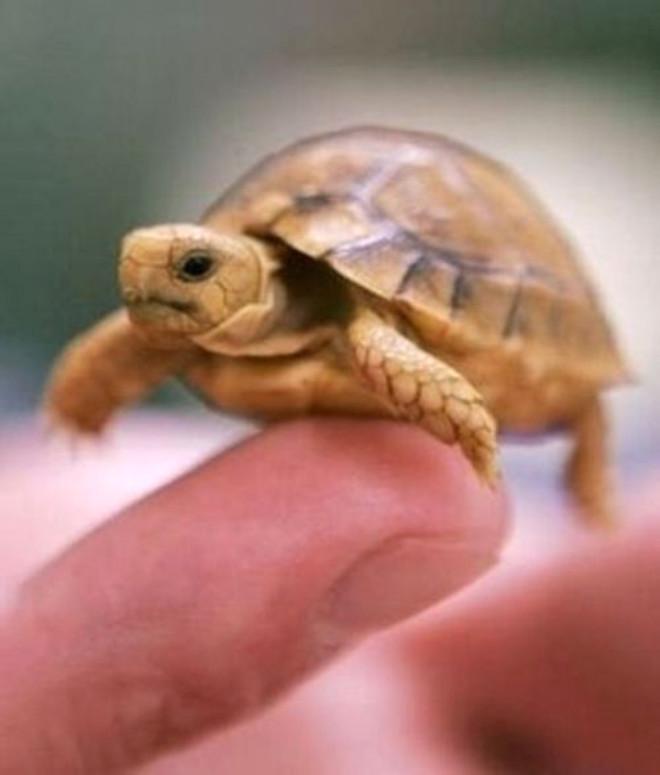 Dünyanın En Sevimli Hayvanları