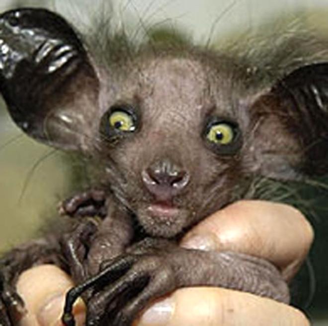 Dünyanın En Korkunç Hayvanları Foto Galerisi