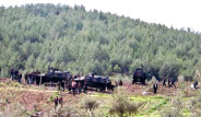 PKK'ya İki Koldan Dev Operasyon