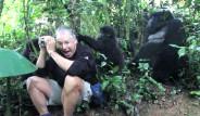 Turistlerin Karşısına Vahşi Goril Çıkarsa