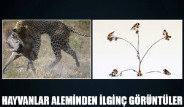 Hayvanlar Aleminden İlginç Görüntüler