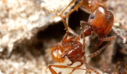 Karınca Deyip Geçmeyin!