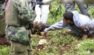 Yaralı Filistinliye Köpekli İşkence
