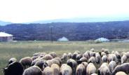 Askerler Çobanları Dövüp Koyun Çaldı