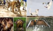 En İyi Vahşi Hayat Fotoğrafları