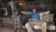 Dünyanın En Büyük Köpeği