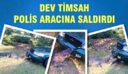 Dev Timsah Polis Aracına Saldırdı