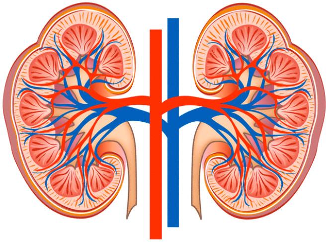 Organlarını Bağışlayan Ünlüler