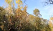 Sonbahar'ın Son Fotoğrafları