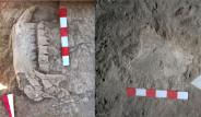 10 Milyon Yıllık Fosil Bulundu