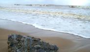 Plajdaki Timsah Kafası Panik Yarattı