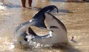 Köpekbalığını Kuyruğundan Yakaladı