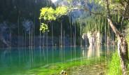 Gölün Altında Bir Orman Var