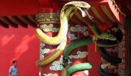 Asya'yı Yılanlar Sardı