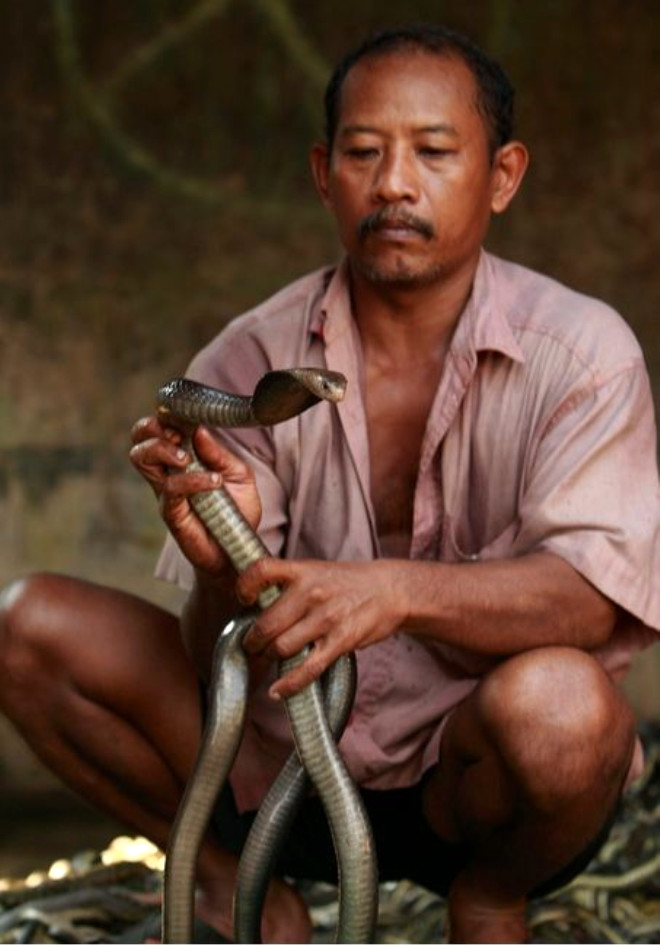 Moda Uğruna 'Kobra Katliamı'