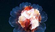Denizanalarının Bilinmeyen Dünyası