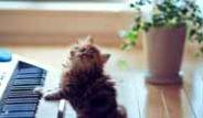 Dünyanın En Tatlı Kedisi: Daisy